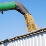 Soja transgênica cosit cooperativa agrícola Crédito: United Soybean Board/ Flickr