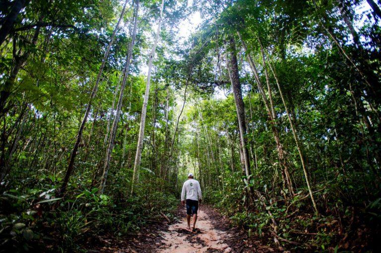 concessão de florestas