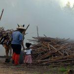 fiscalização do trabalho em áreas rurais
